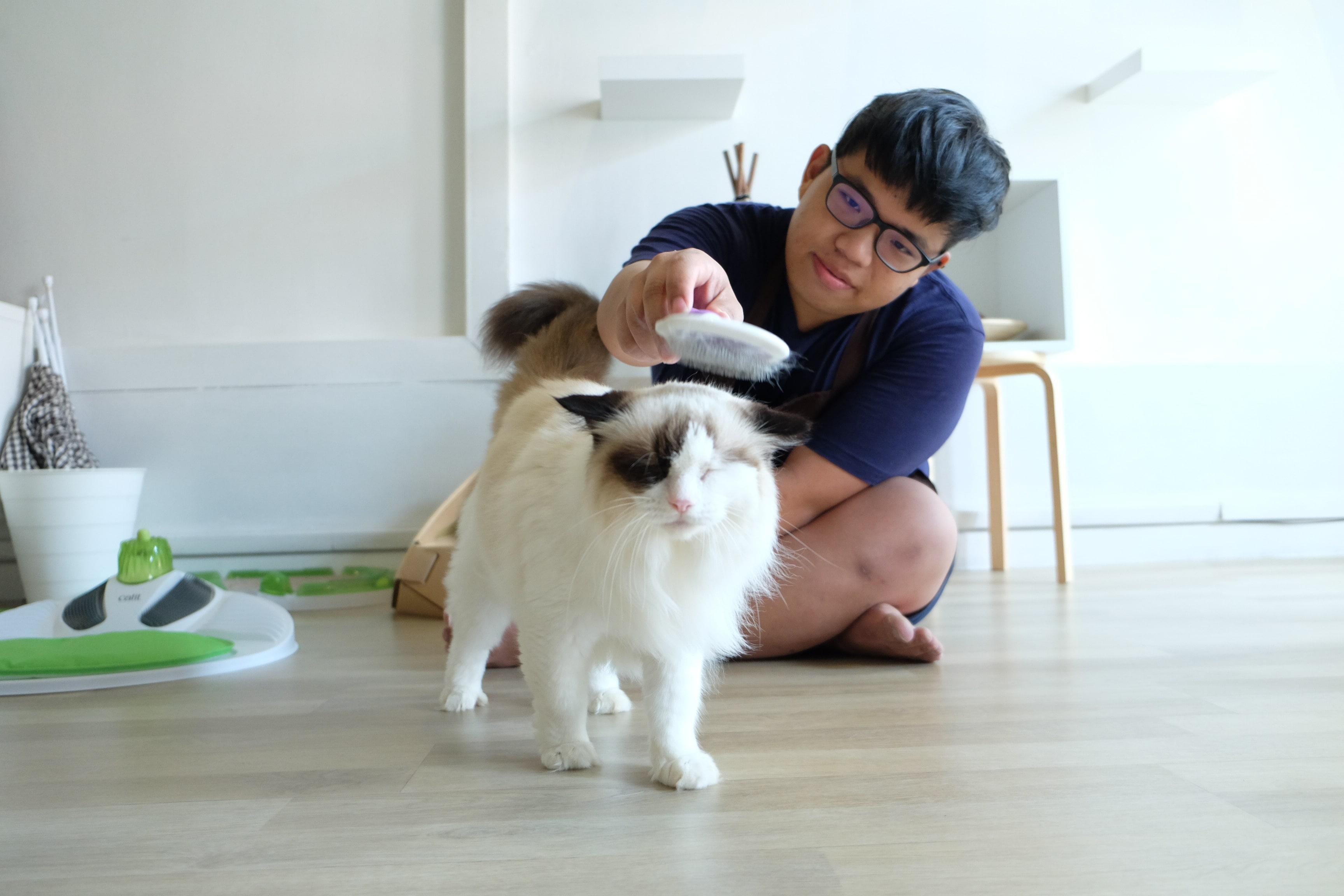 cat caretaker grooming tips to choosing cat boarding hotel singapore