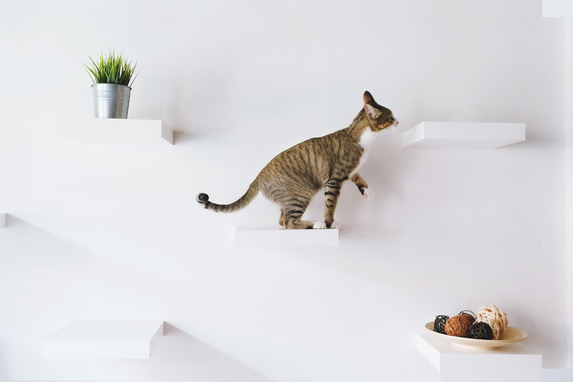 cat wall shelf tips to choosing cat boarding hotel singapore