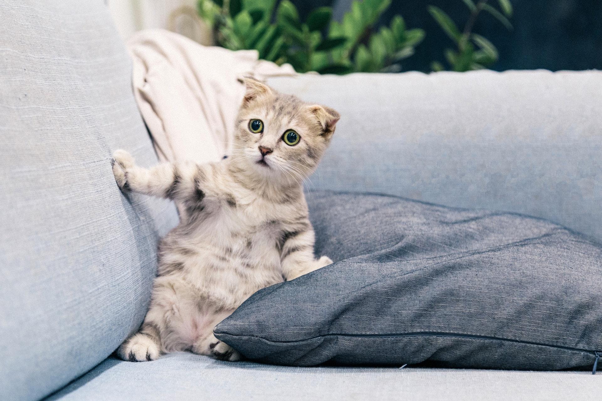 cute cat sitting on sofa