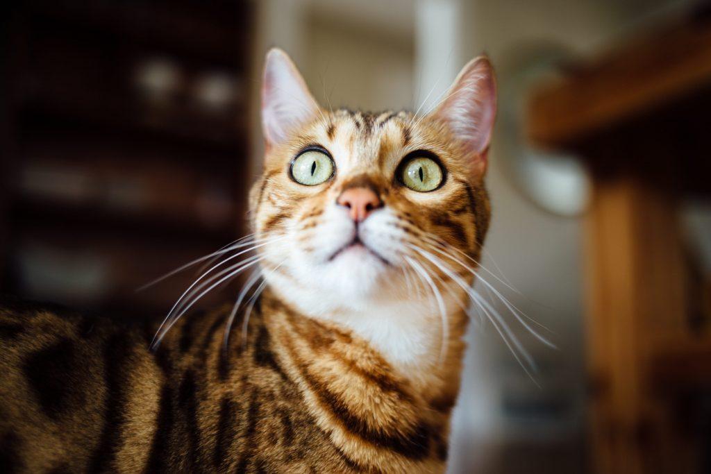 another surprised cat Paul Hanaoka Unsplash