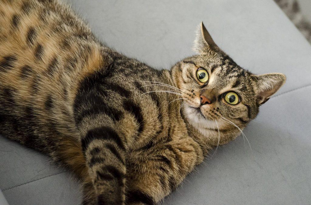cat looking surprised pixabay