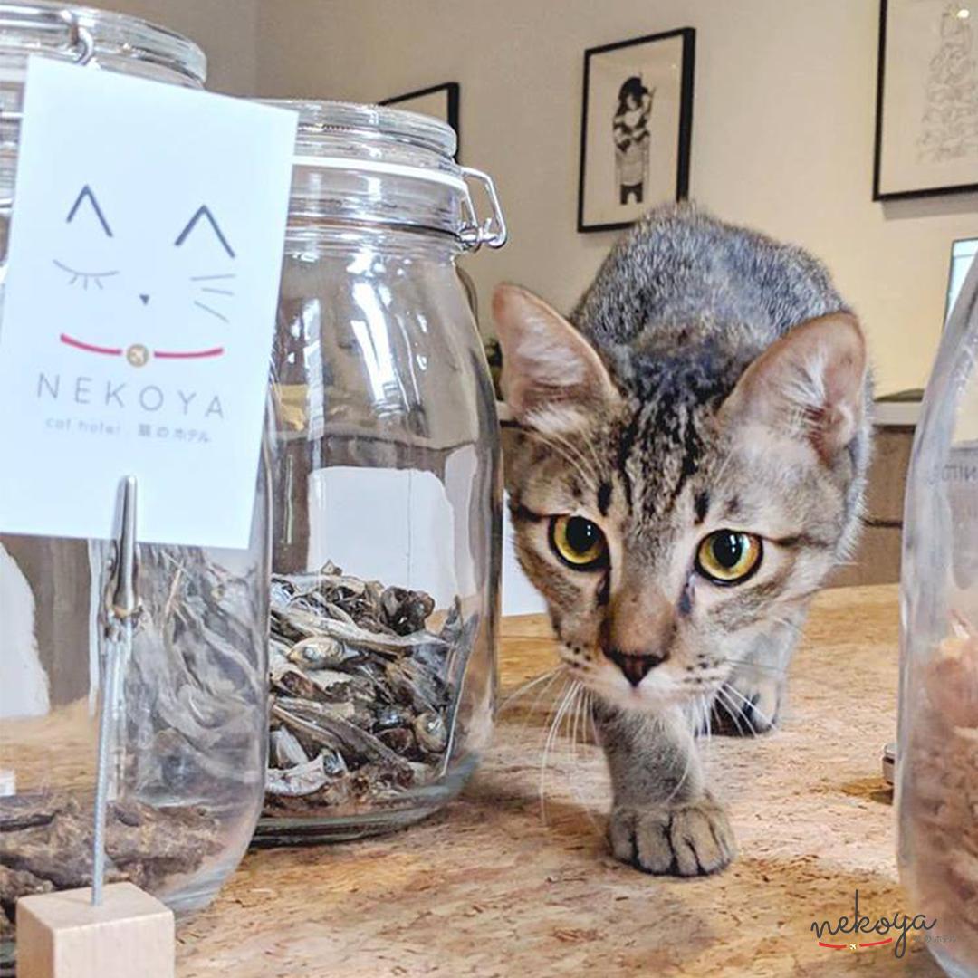 cat surrounded by food nekoya