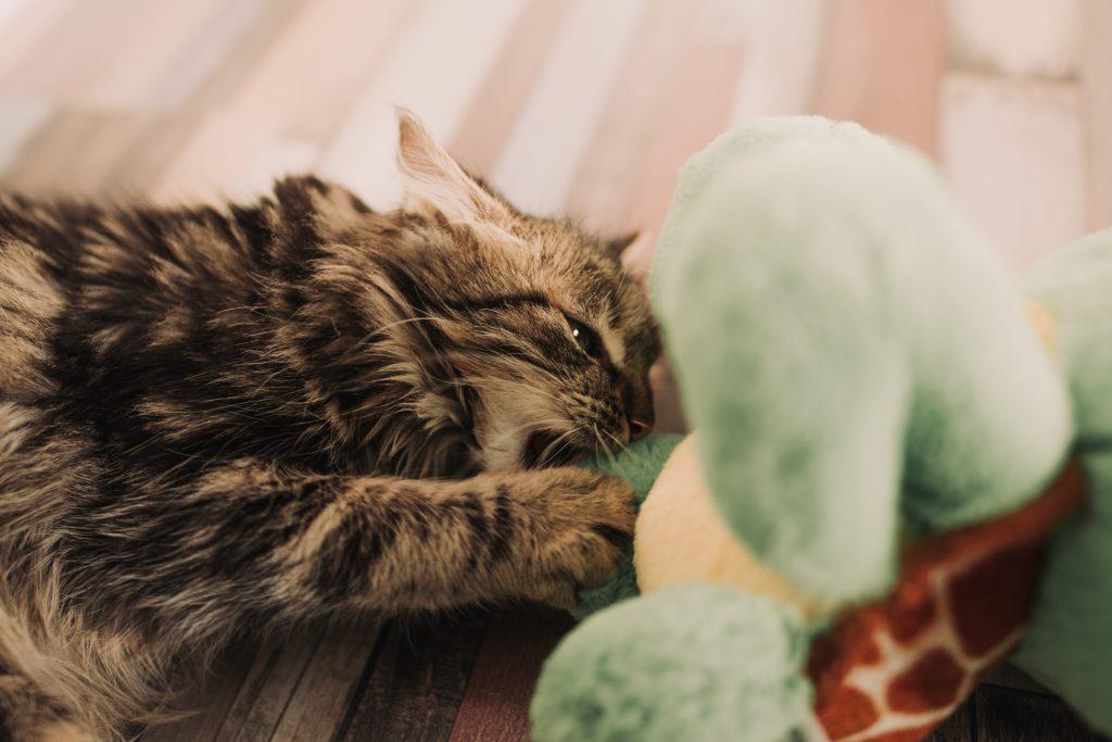 Anton Darius cat playing with plush toy unsplash