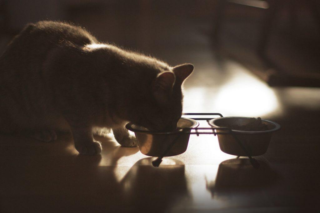kitten eating Mylene Bressan openphoto